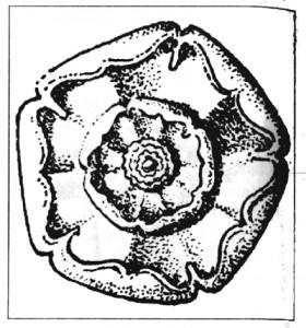 Rose (Q8)